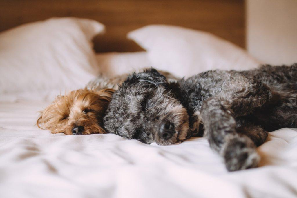 Consejos para disfrutar de un sueño tranquilo